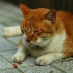 【解消】花粉症による眠気の症状を抑える7つの方法!