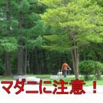 【特集】夏の時期は要注意!マダニの生息地や生息場所の特徴