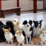 【犬の熱中症対策】大切な愛犬を熱中症から守る7つの対策!