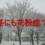 【12月・1月の花粉症情報】冬の花粉症の種類と症状と対策!