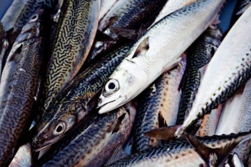 花粉症対策 青魚のDHA EPA